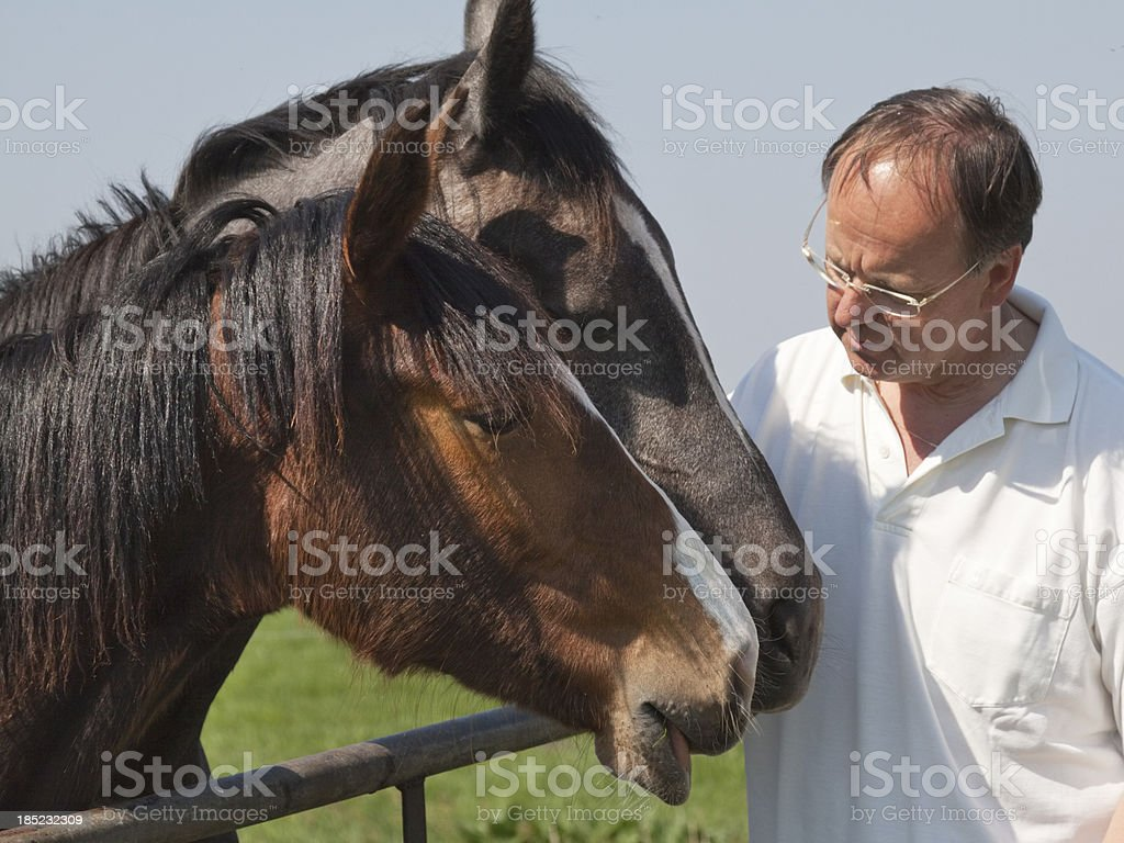 talking to horses stock photo