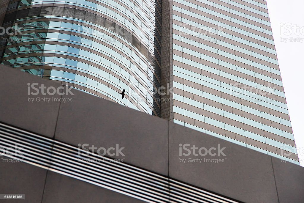 Tall buildings and Black kite stock photo