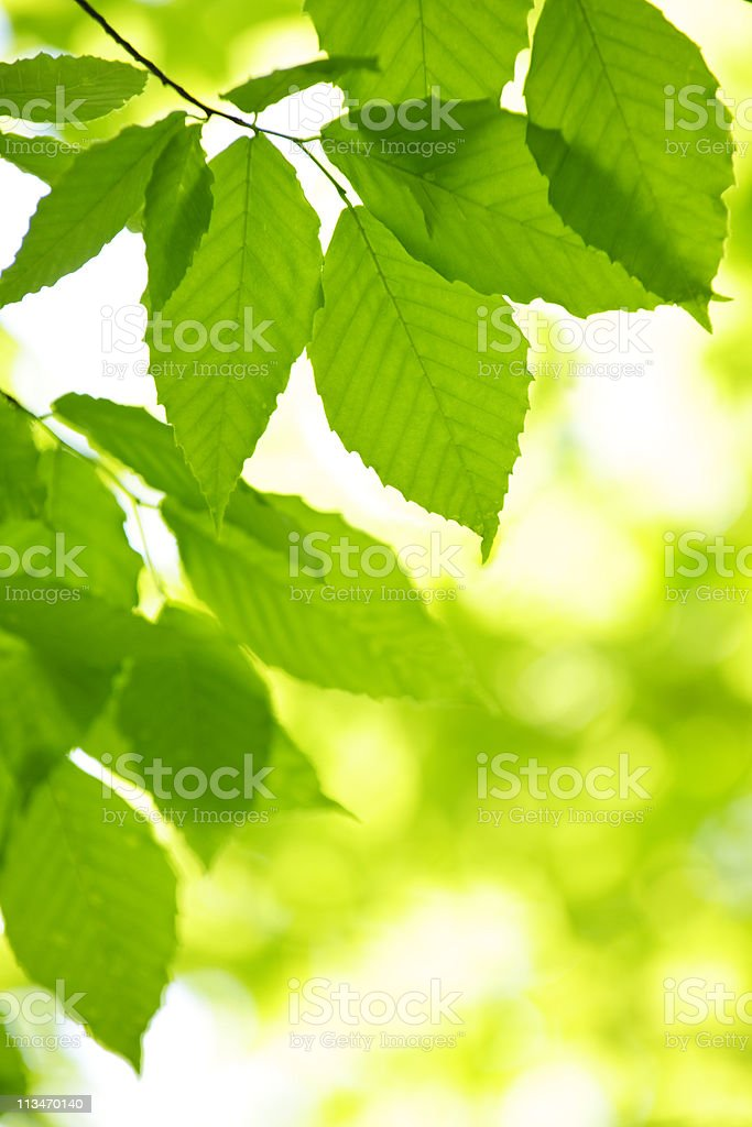 Tall close-up of green leaves in the spring stock photo