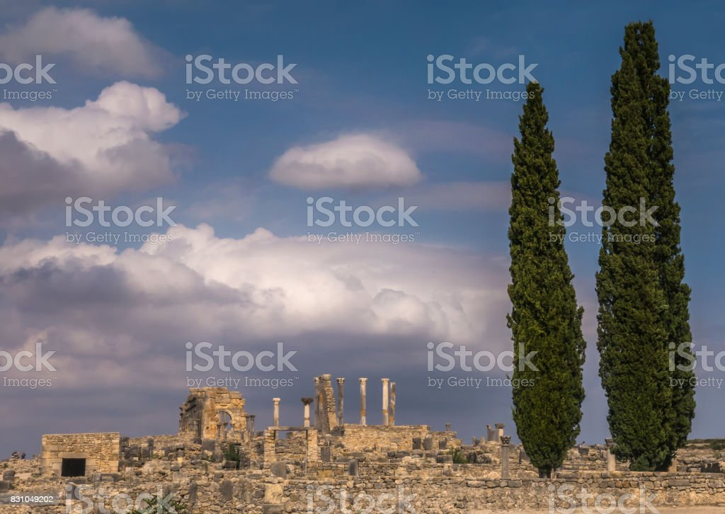 Tall cypress trees stand in the foreground of the archaeological site of Volubilis, with pillars and columns visible in the ruins of the Roman empire outpost in Morocco. stock photo