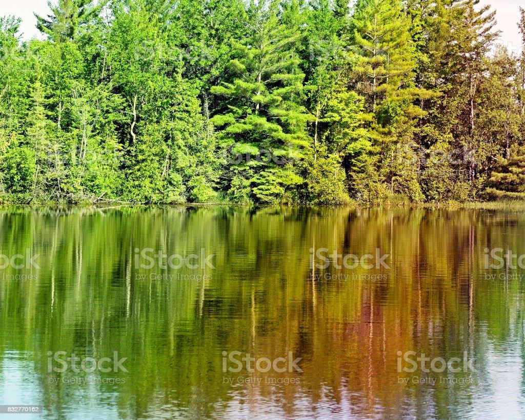Tall Evergreen trees reflecting on beautiful calm lake waters stock photo