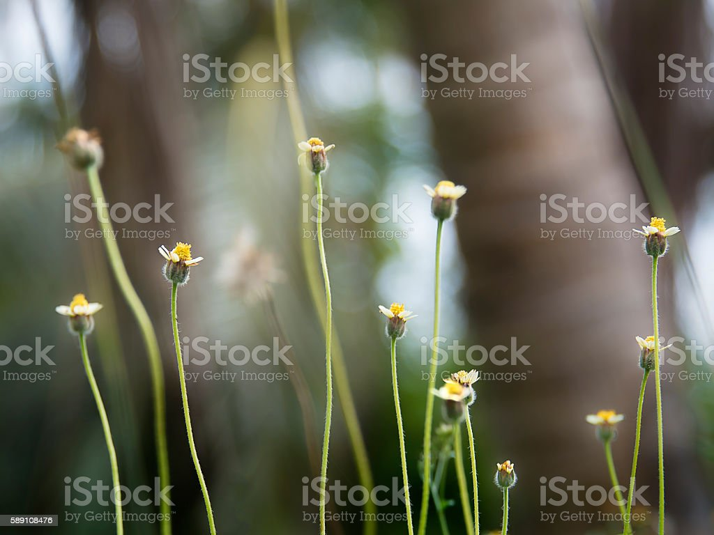 Tall flowers stock photo