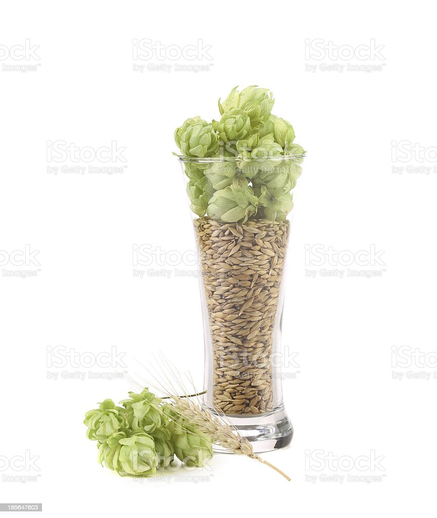 Tall glass full of grains and hop. royalty-free stock photo
