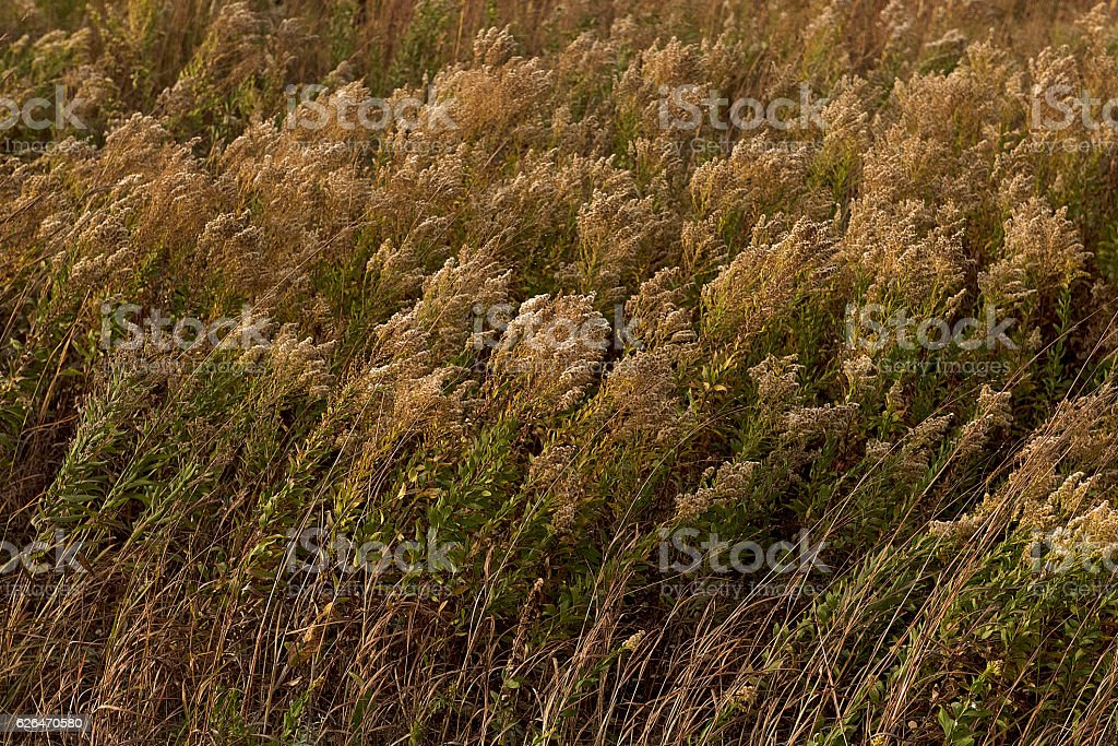 Tall Grass Curved stock photo