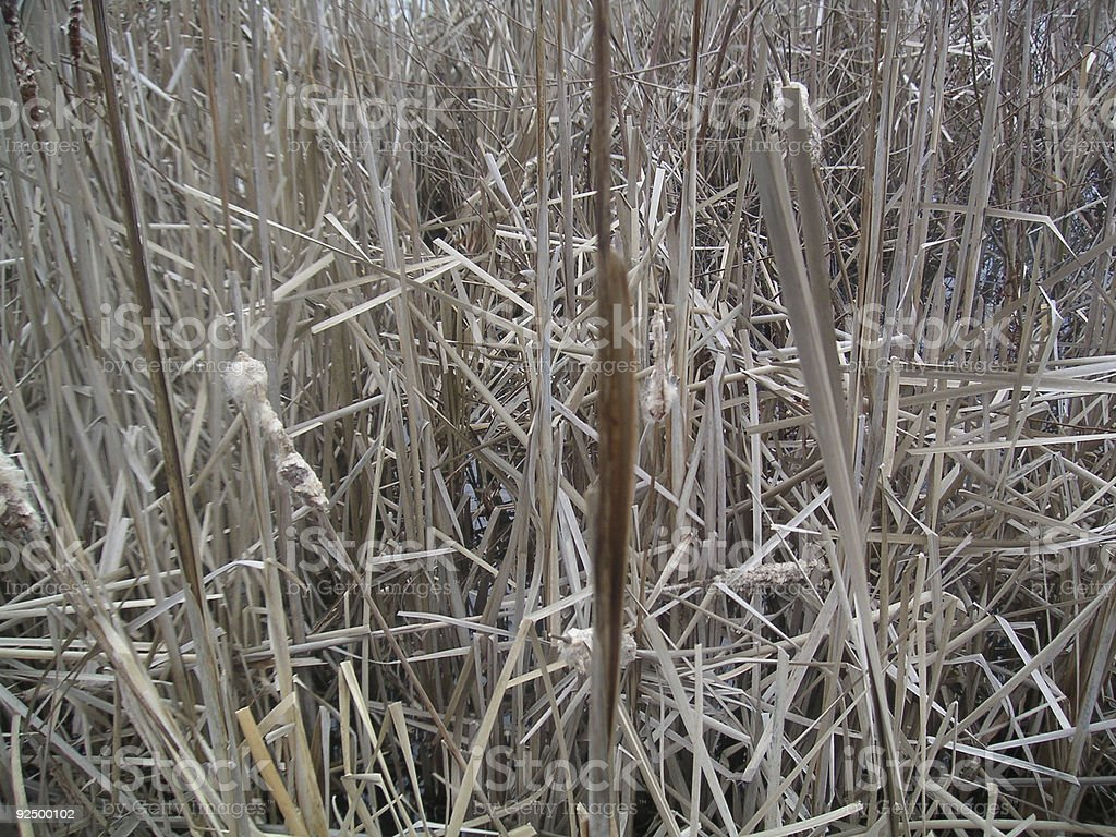 tall grass in lake royalty-free stock photo