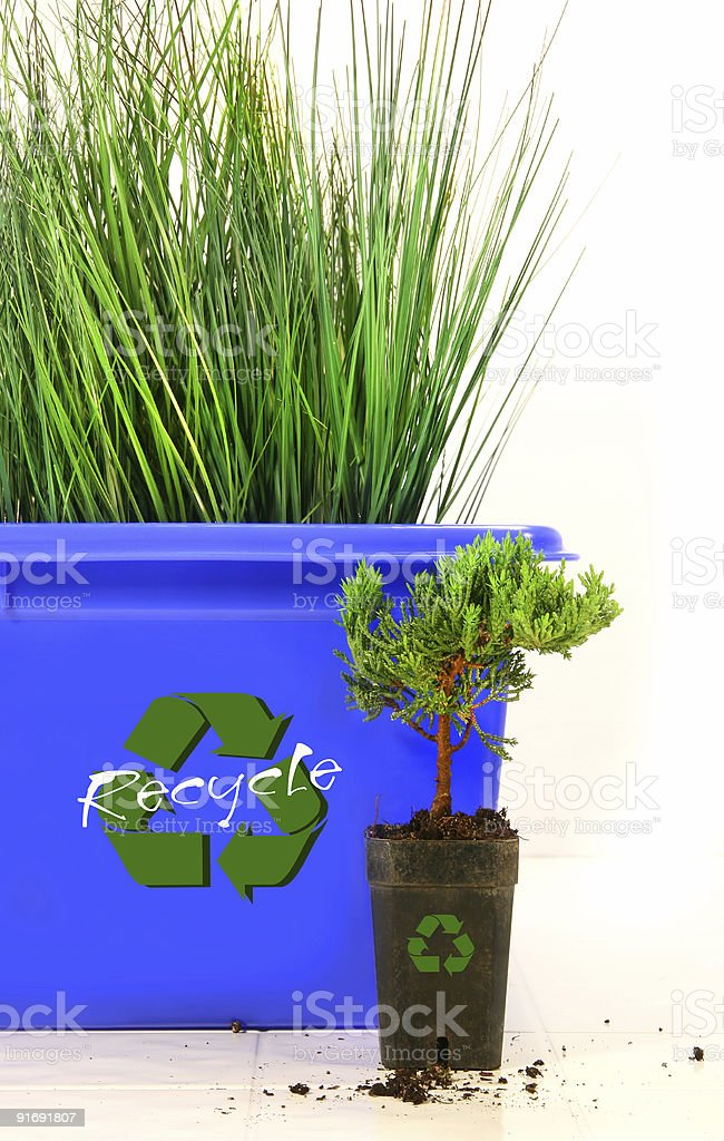 Tall grass inside recycle bin stock photo