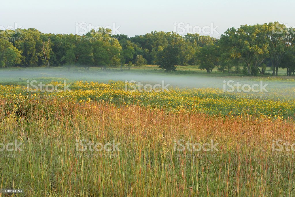 tall grass prairie, misty morning stock photo