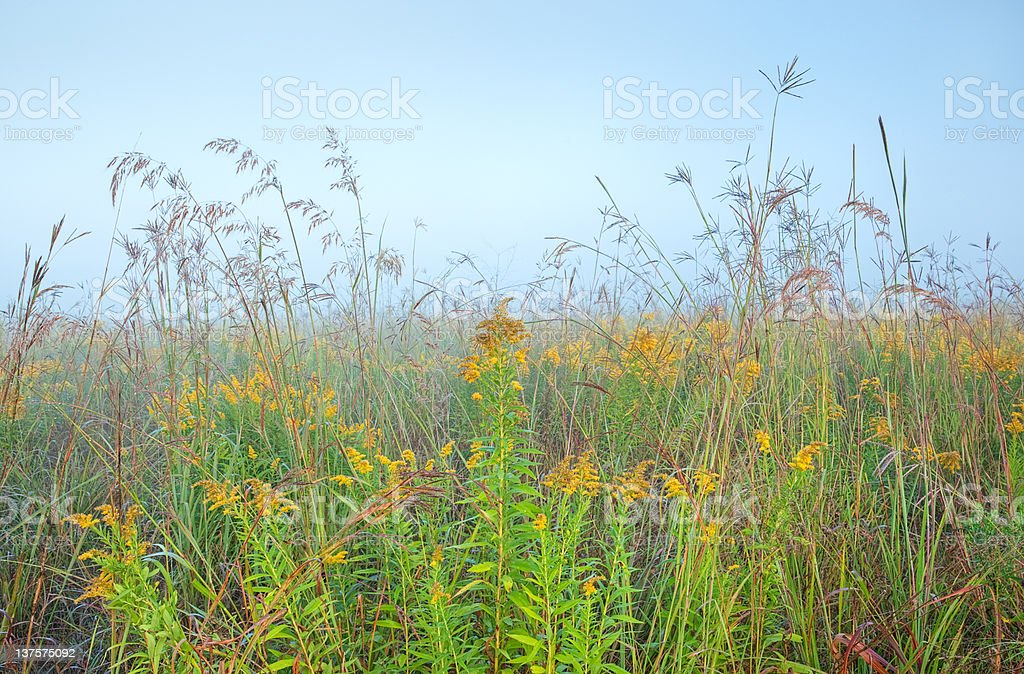 Tall Grass Prairie stock photo