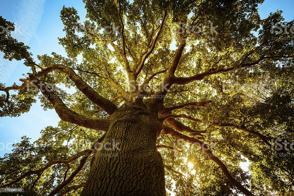 Tall Green Tree in Spring stock photo