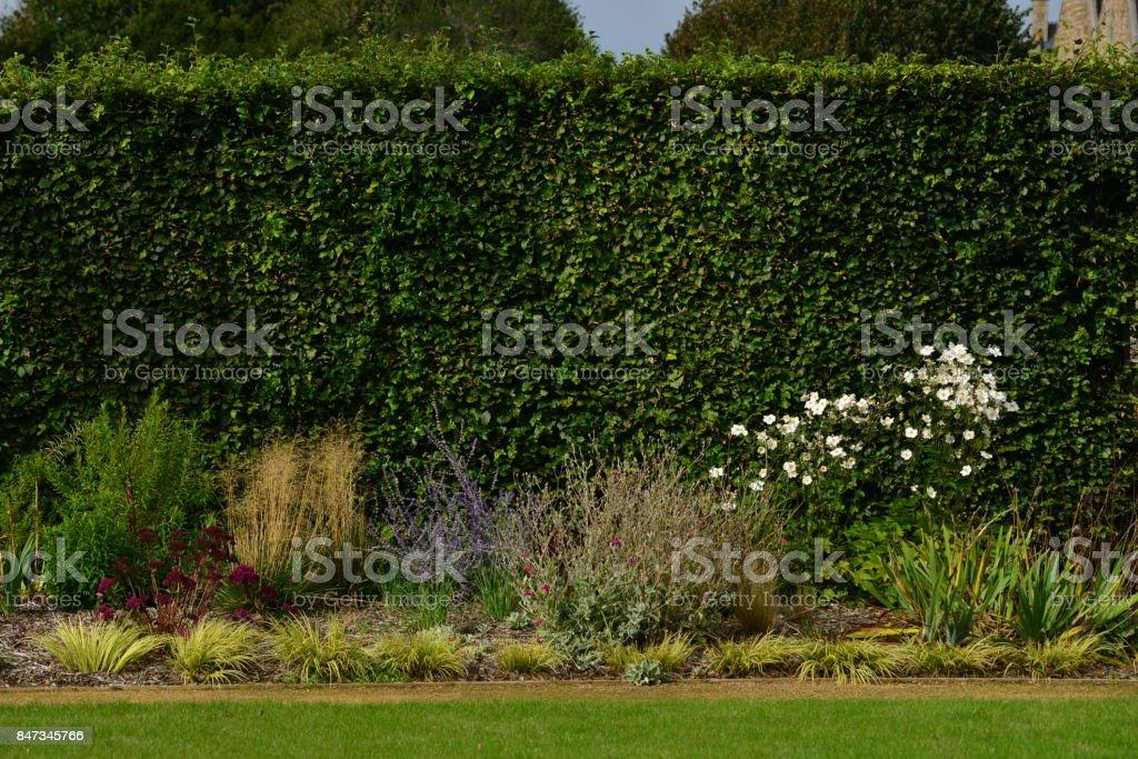 Tall hedge, Jersey, U.K. stock photo