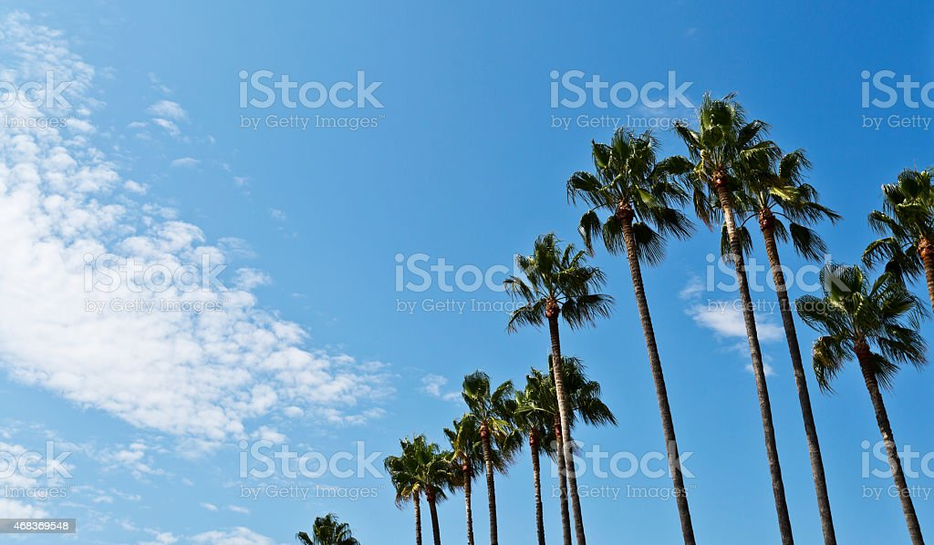 Tall Palm Trees Against a Partially Cloudy Sky stock photo