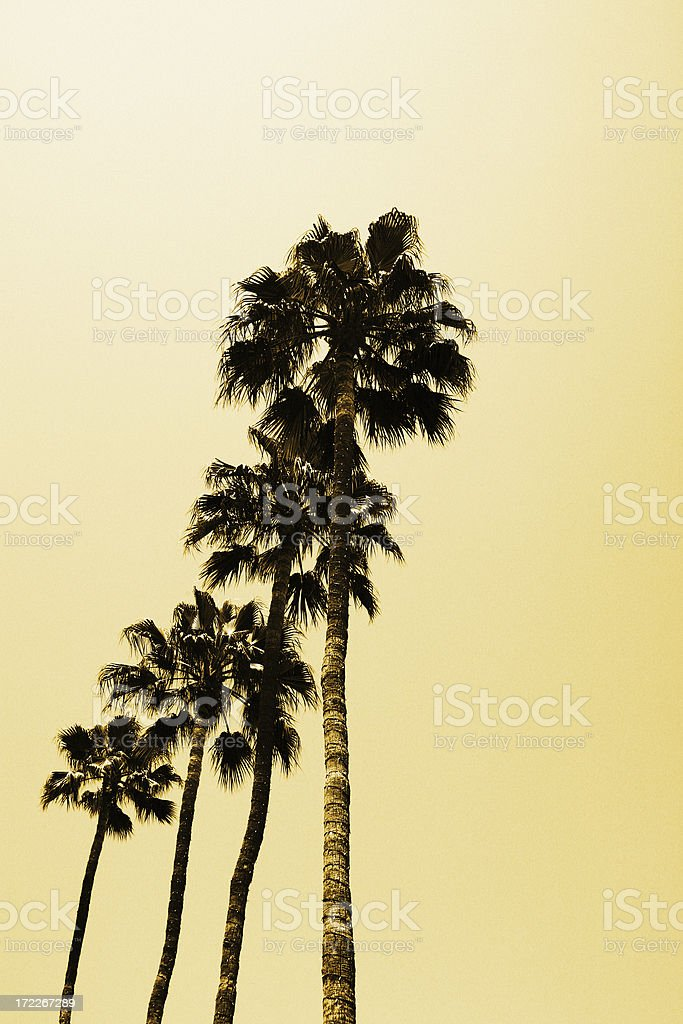 Tall Palm Trees in Beverly Hills Los Angeles royalty-free stock photo