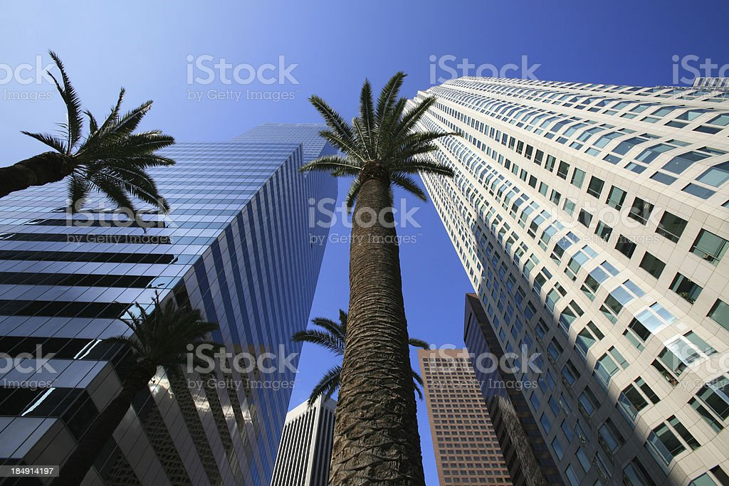 Tall palm trees vs. skyscrapers royalty-free stock photo