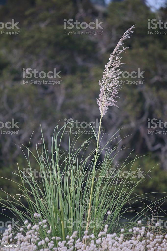 Tall Plant stock photo