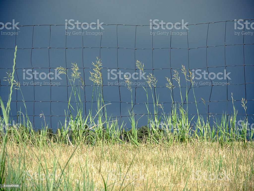 Tall Praire Grass along Wire Fence stock photo