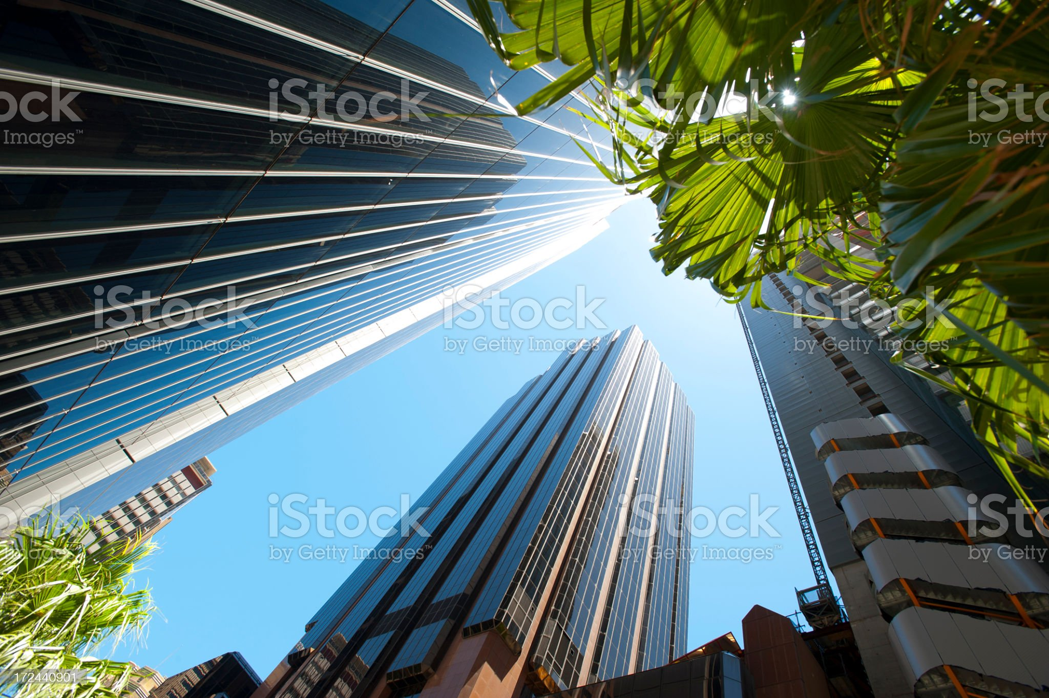Tall skyscrapers with palm trees royalty-free stock photo