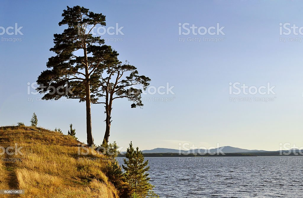 Tall spreading pine tree standing on the cliff-summer landscape stock photo