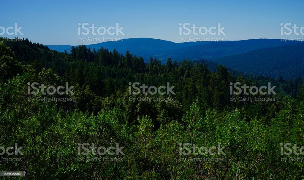 Tall Trees Grove Lookout stock photo