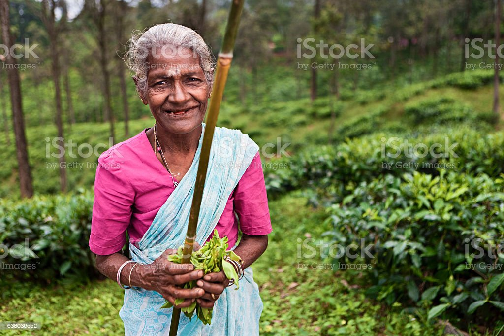 Tamil tea pickers collecting leaves, Sri Lanka stock photo