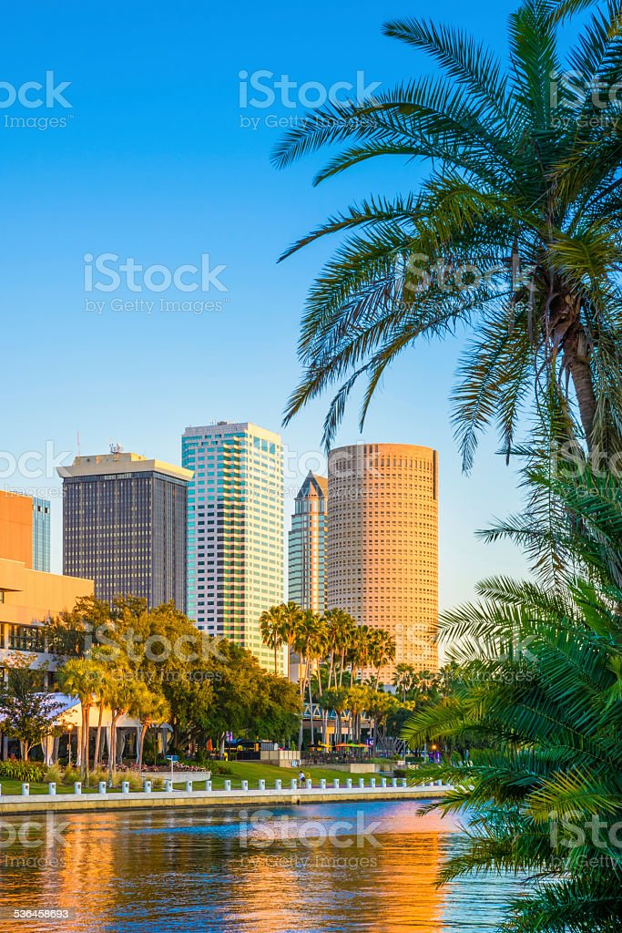 Tampa Florida, skyline, skyscrapers, cityscape, palm tree, copyspace, vertical cover stock photo