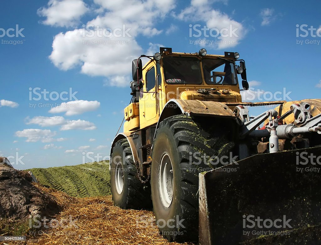 tamping silage stock photo