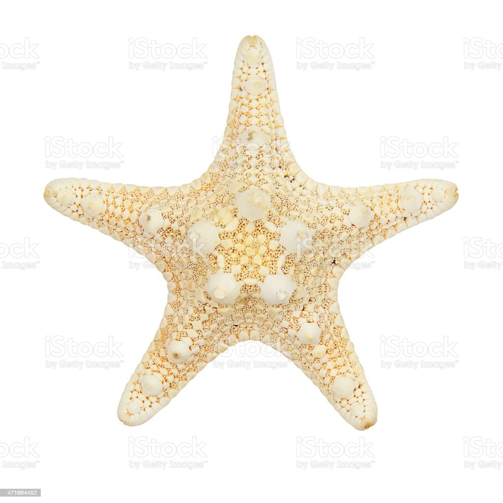 Tan starfish isolated on white background stock photo