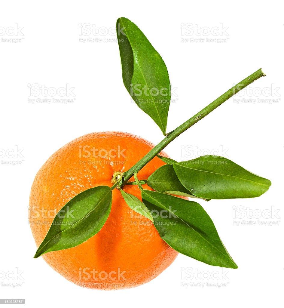 Tangerine, citrus fruit isolated on white stock photo