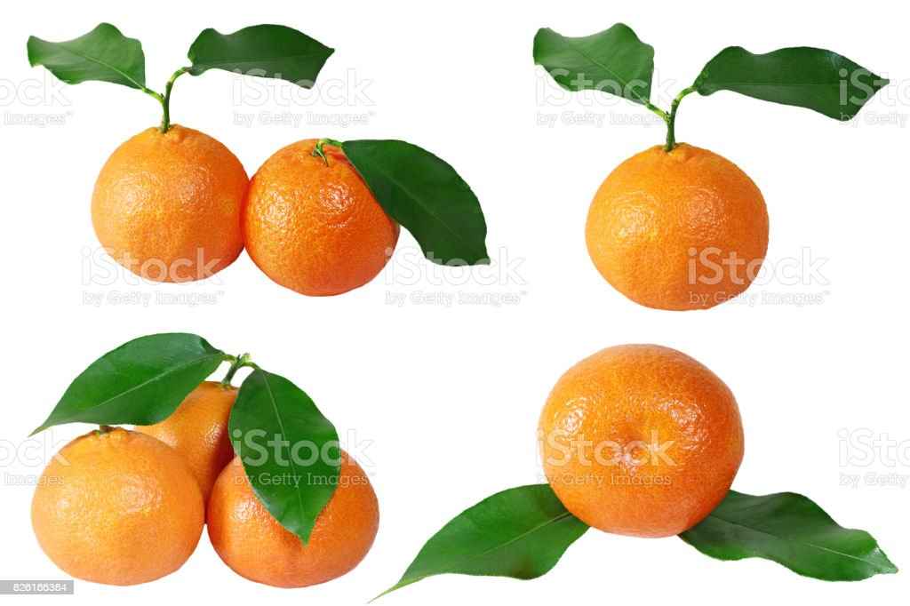 Tangerine collection stock photo