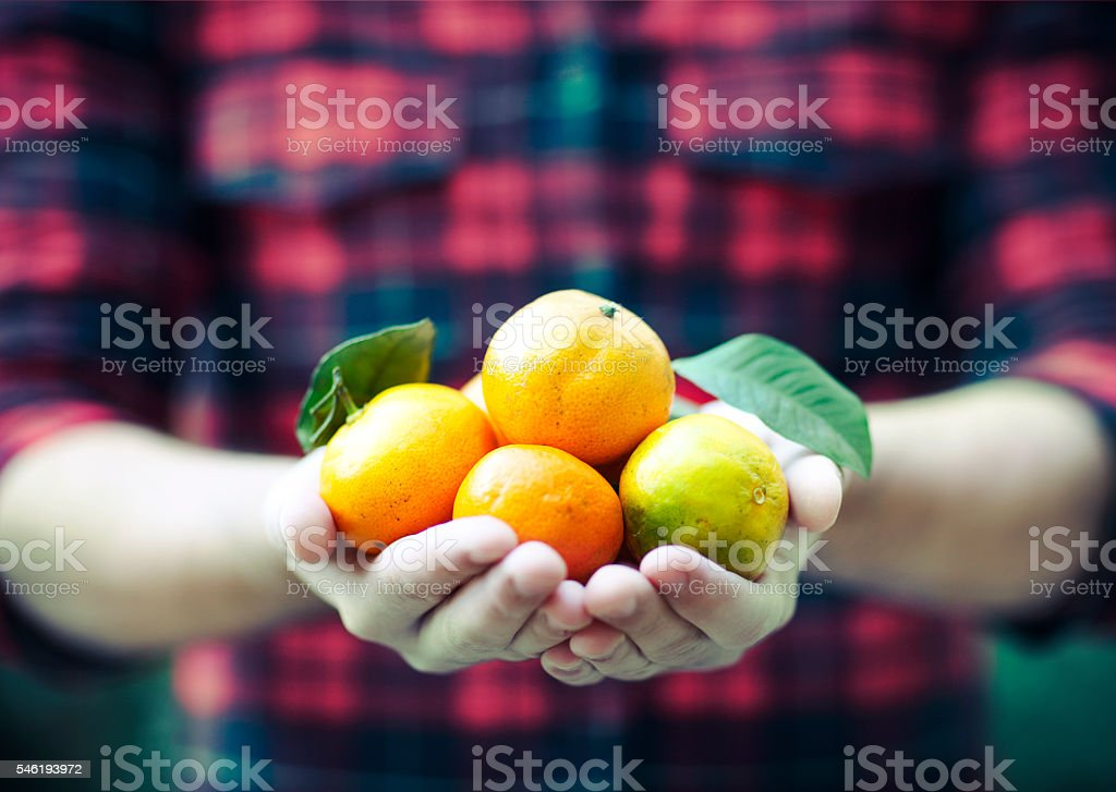 Tangerine in the man hands stock photo