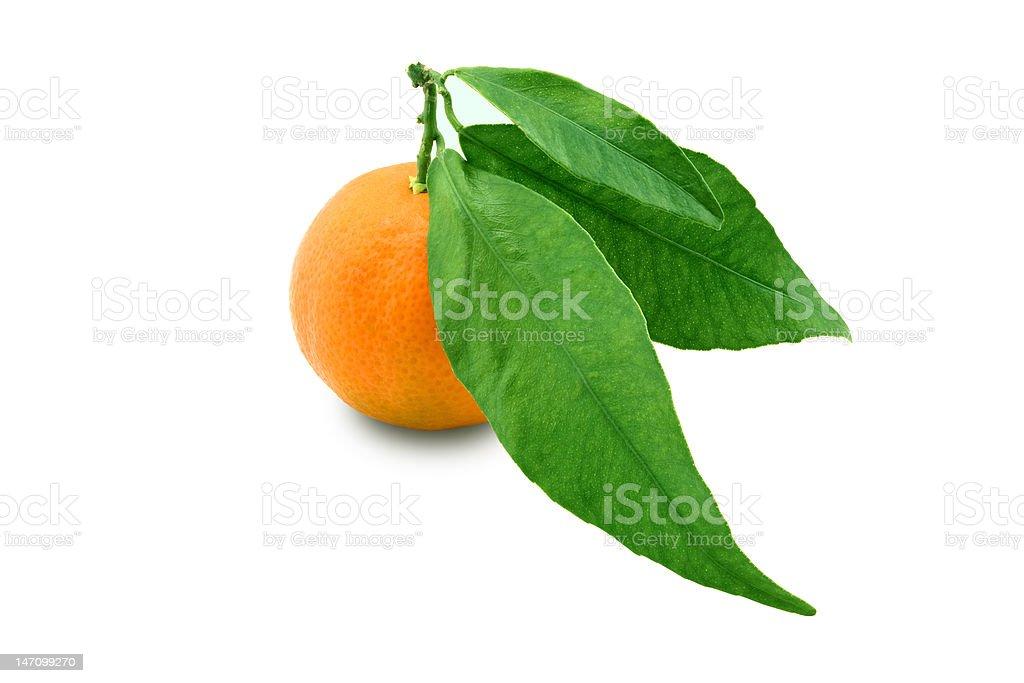 tangerine royalty-free stock photo