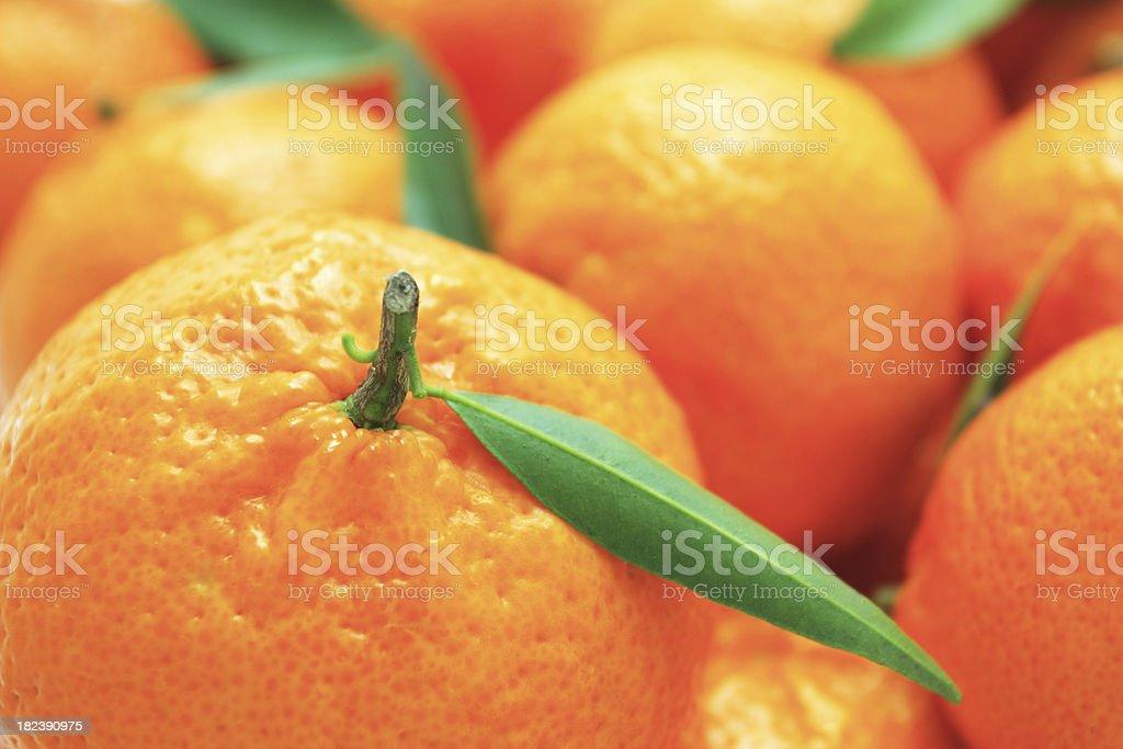 Tangerines. royalty-free stock photo