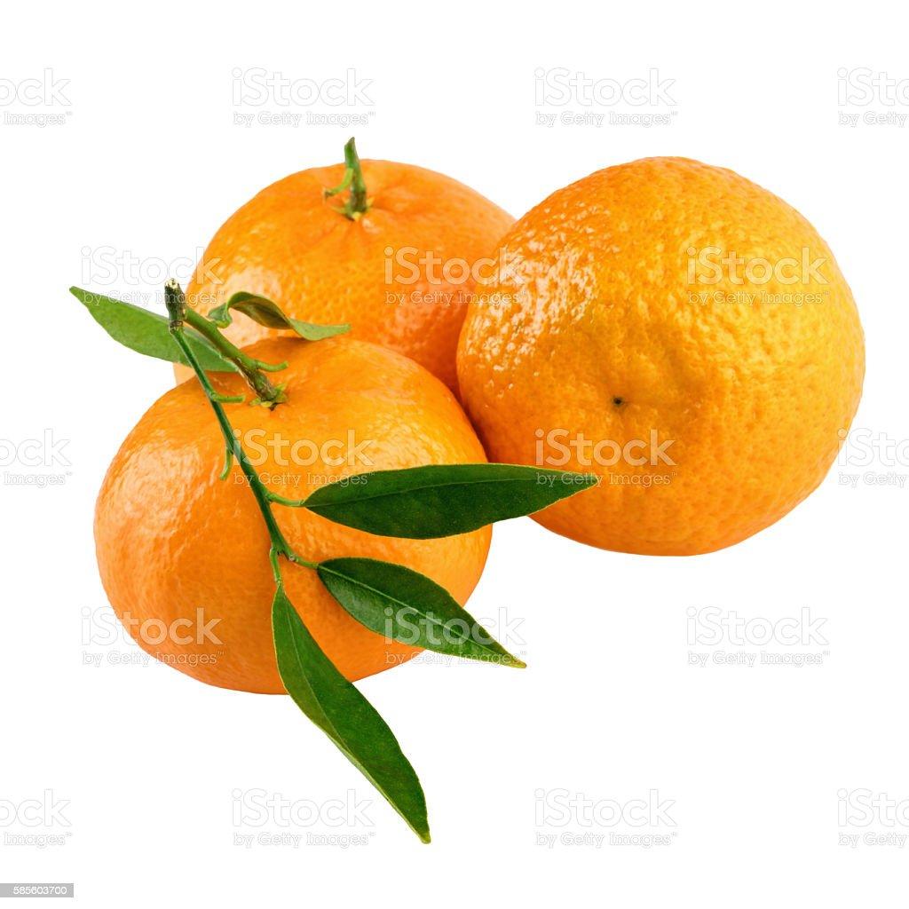 Tangerines three mandarins isolated on white stock photo