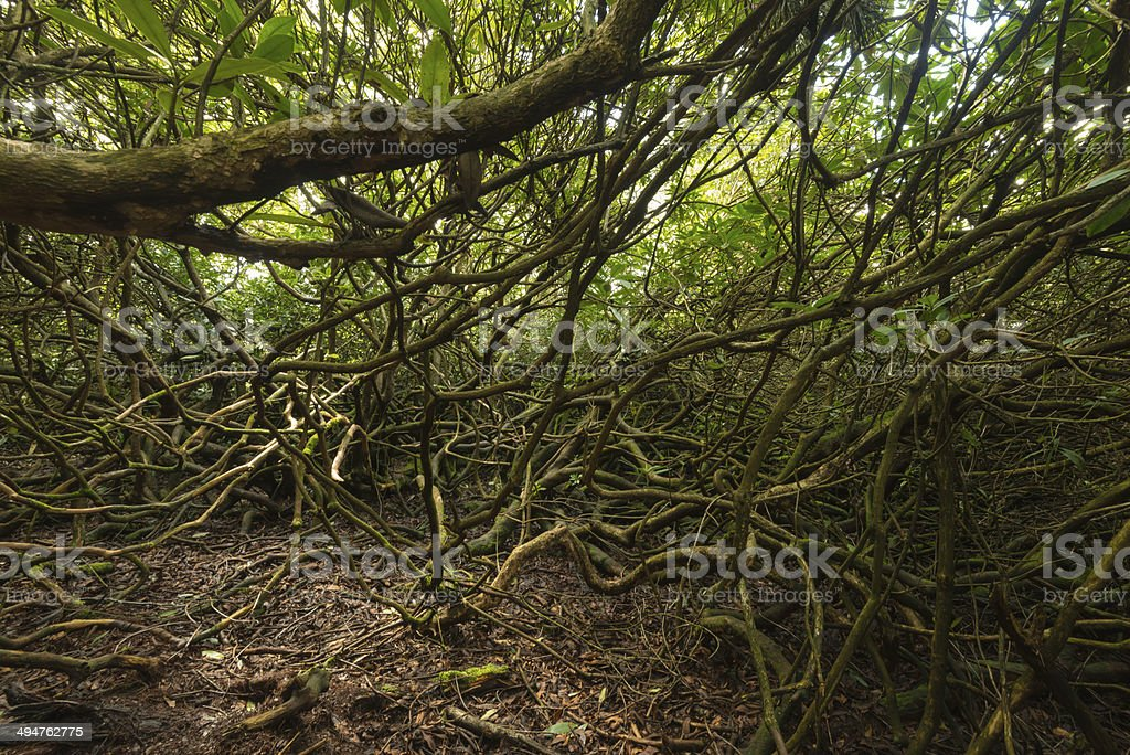 Tangle trees  background royalty-free stock photo