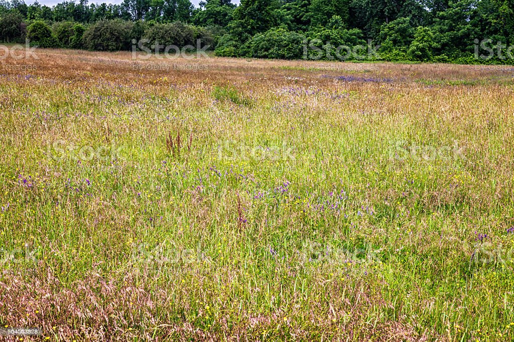 Tangled Overgrown Tall Grass and Wildflowers Sloping Summer Meadow stock photo