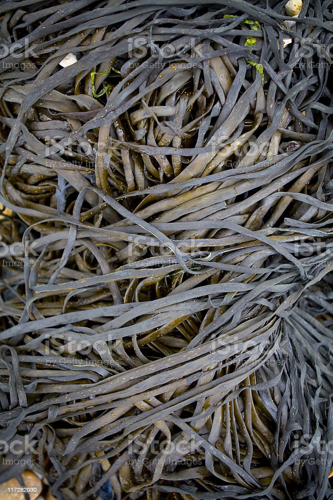 Tangled seaweed royalty-free stock photo