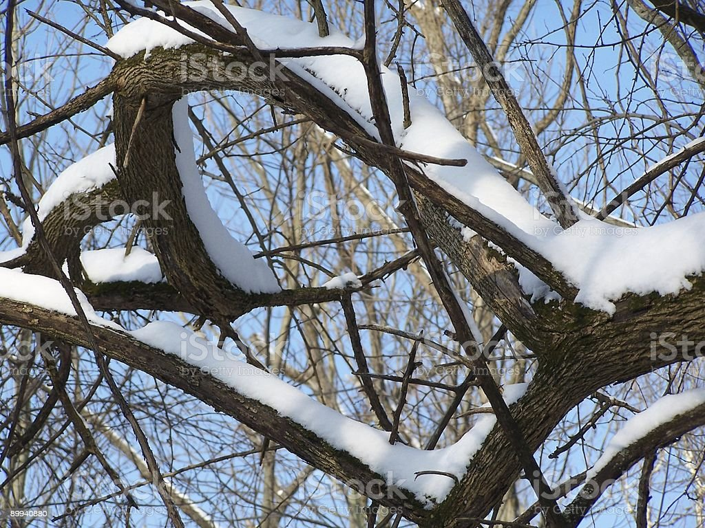 Tangled, Snowy Branches stock photo