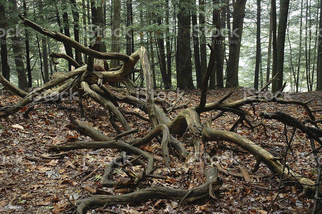Запутанный дерево конечностей Стоковые фото Стоковая фотография