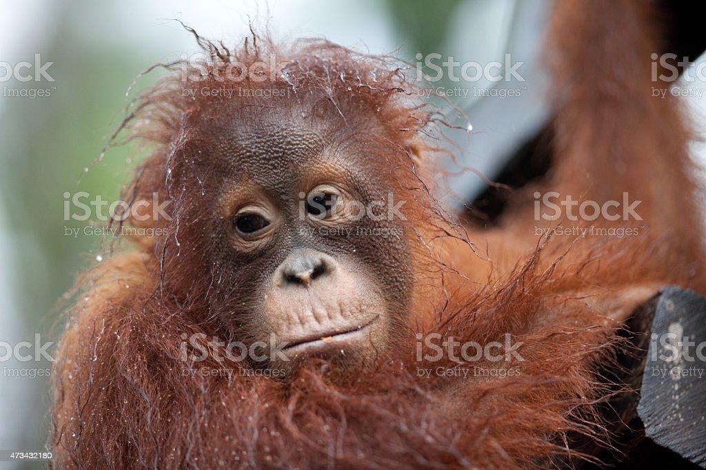 Tanjung Puting National Park stock photo