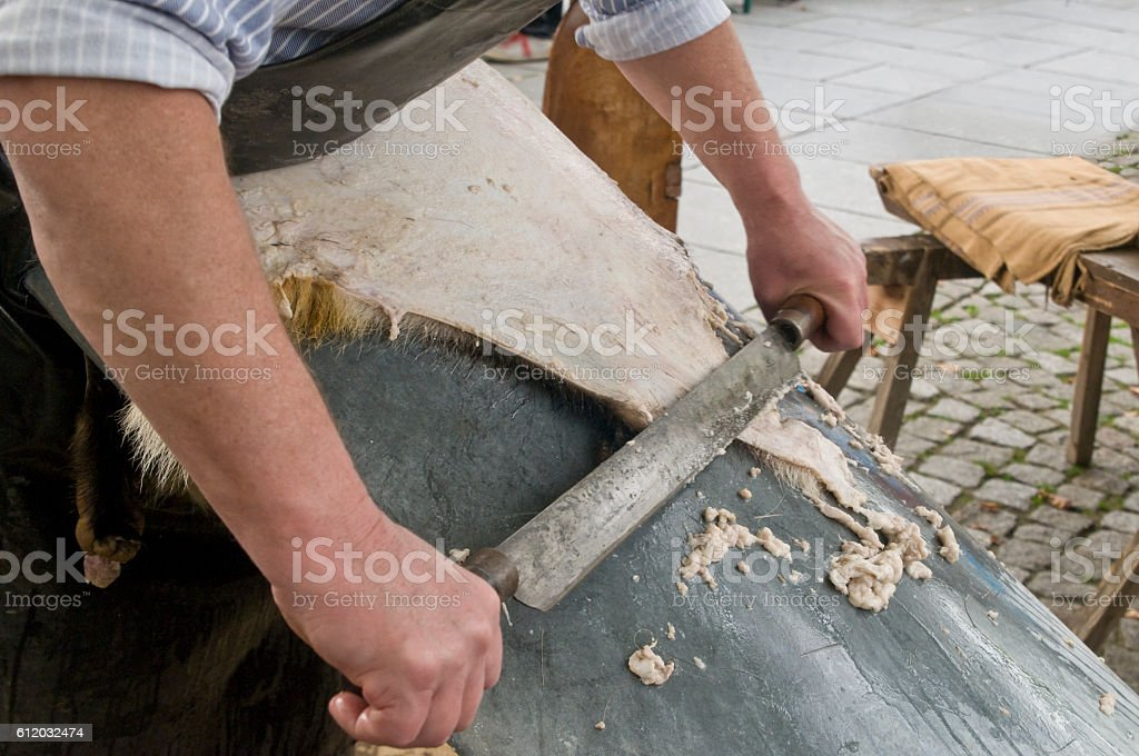 Tanner at the degreasing of an animal fur stock photo