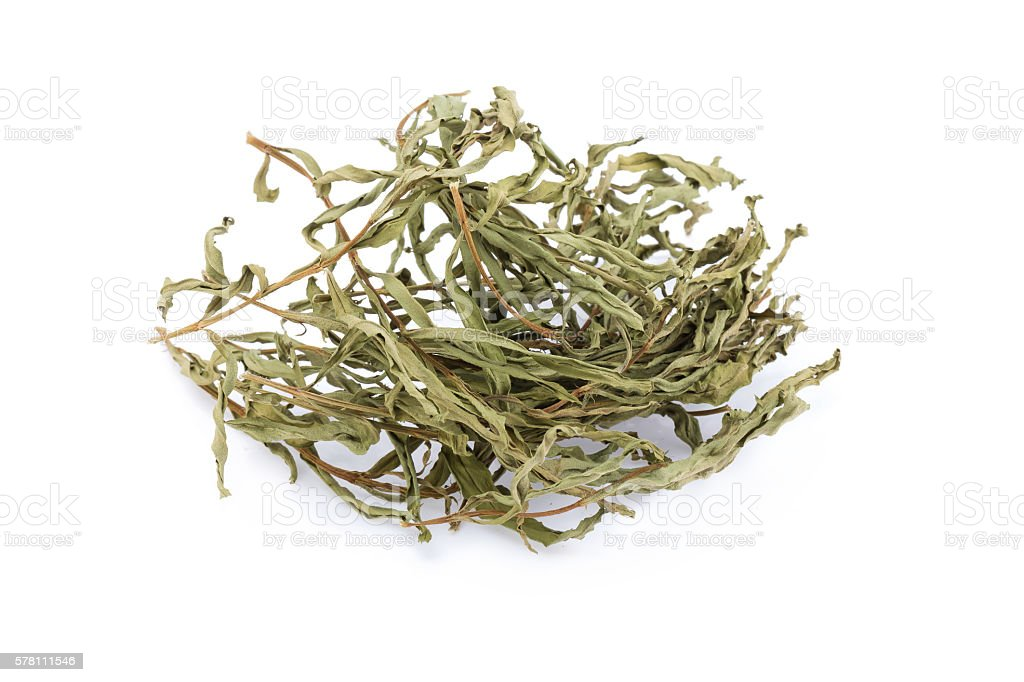 taragon dried herbs stock photo