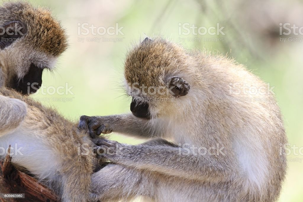 Tarangire National Park - Tanzania stock photo