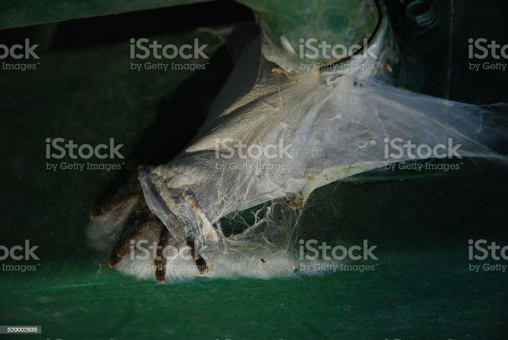 Tarantula on Railing royalty-free stock photo