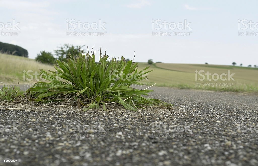 tarmac surrounded plant royalty-free stock photo