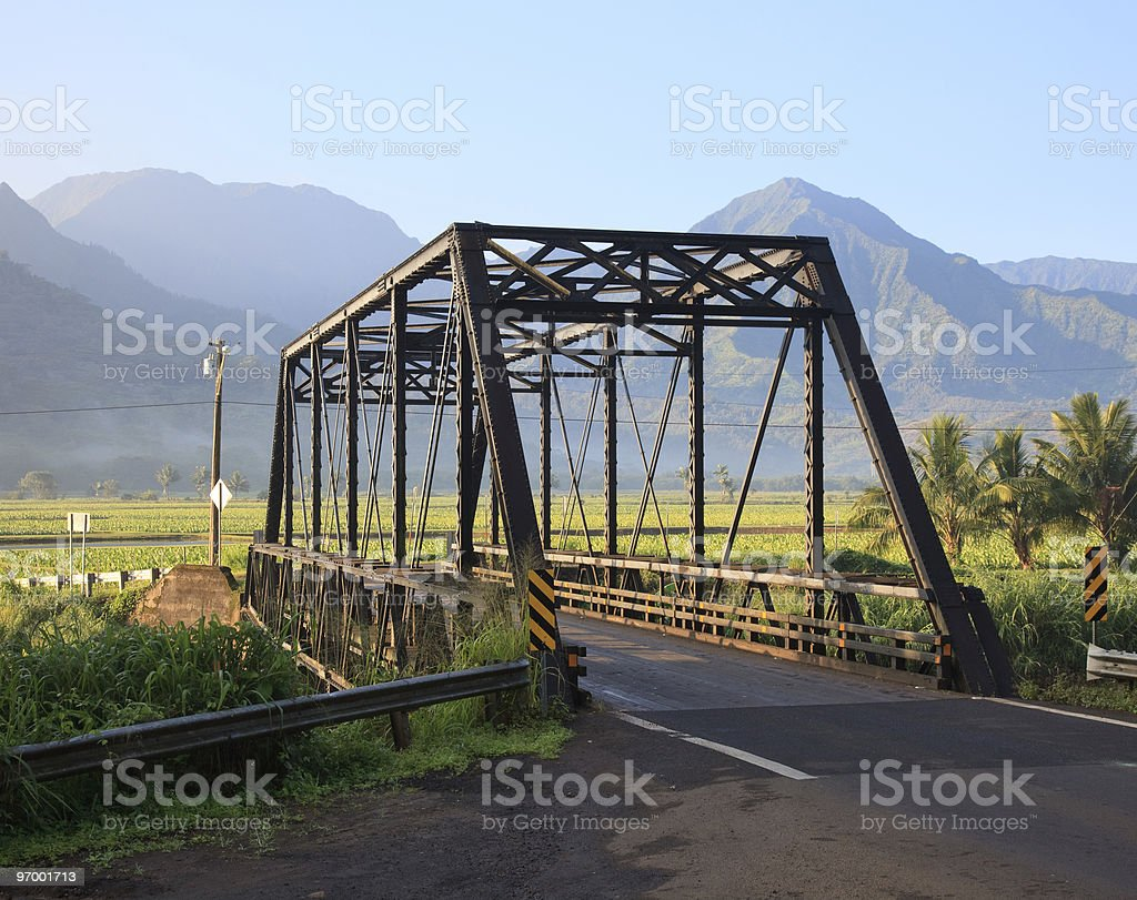 Taro plants at Hanalei Bridge stock photo