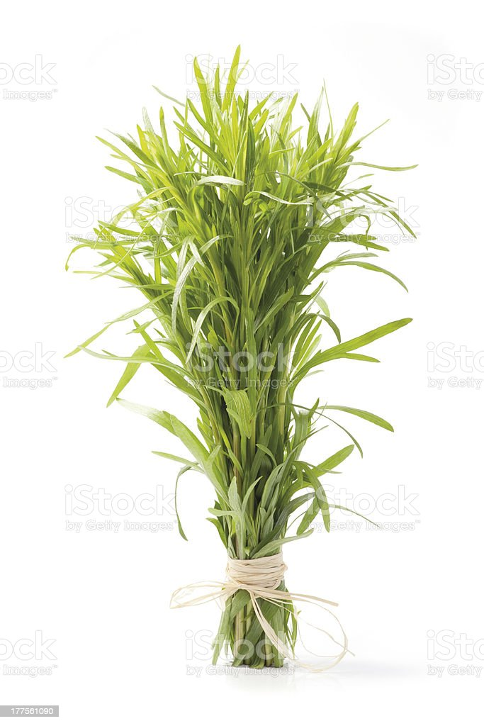 Tarragon herb bunch royalty-free stock photo