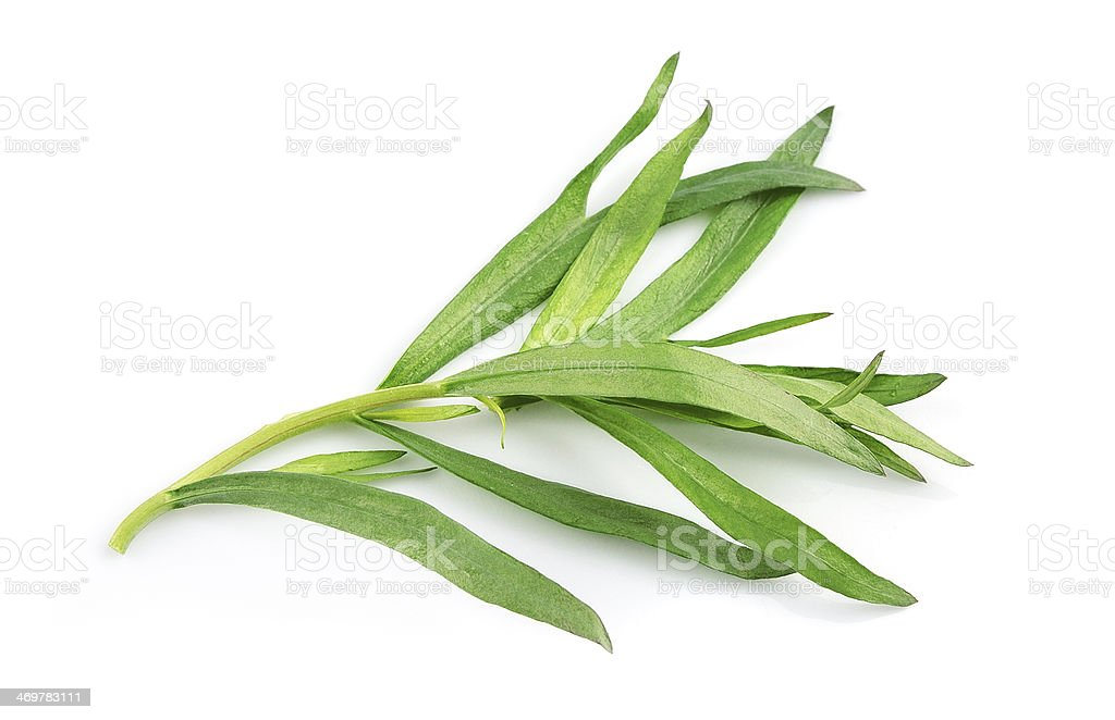 Tarragon herbs on a white background stock photo