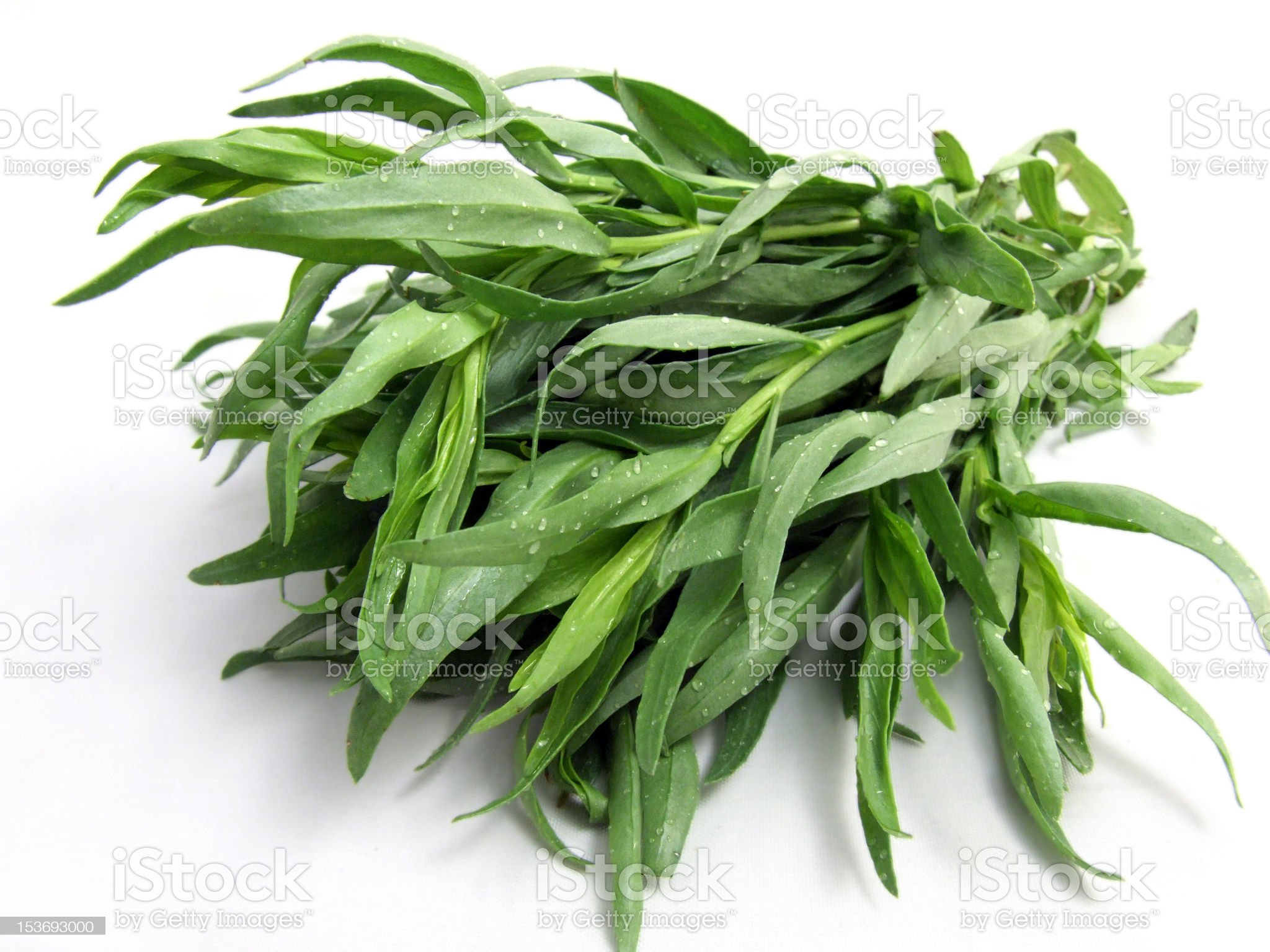 Tarragon royalty-free stock photo