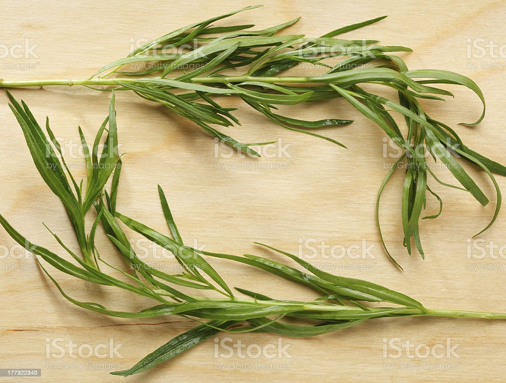 Tarragon twigs composition royalty-free stock photo