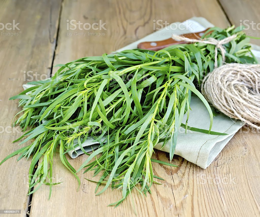 Tarragon with a knife and twine on the board stock photo