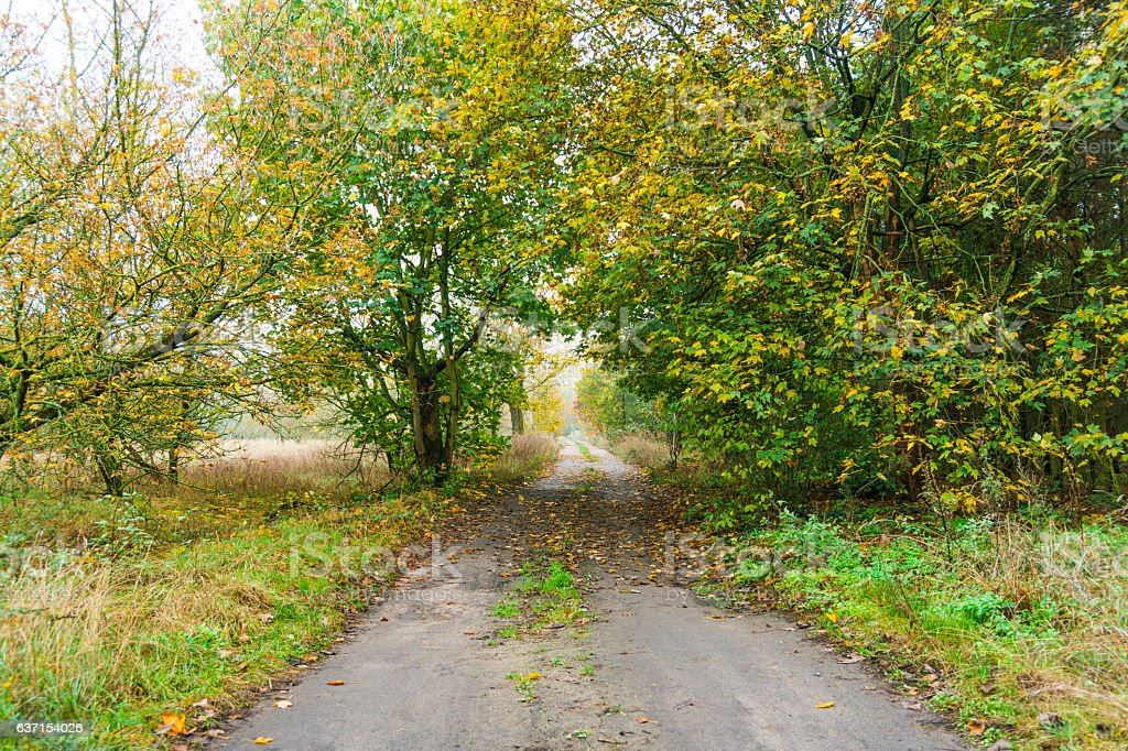 Tarred rural lane disappearing into autumn trees stock photo